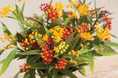 Silky Formula Mix - Asclepias Seed