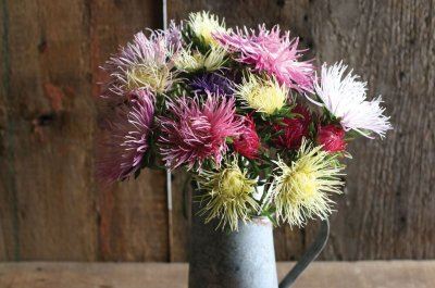 Valkyrie Mix - China Aster Seed
