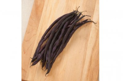 Carminat - Purple Pole Bean Seeds