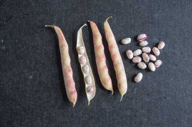Tongue Of Fire - Bean Seed
