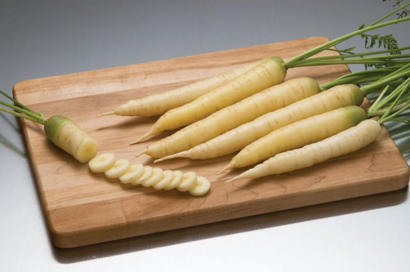 White Satin - Pelleted (F1) Carrot Seed