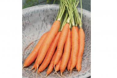 Romance - Pelleted (F1) Carrot Seed