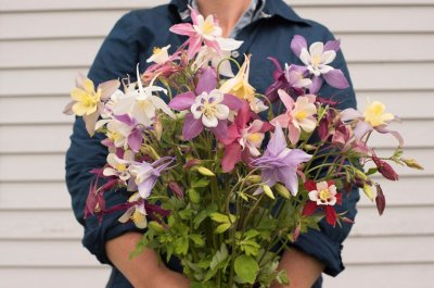 McKana Giants Mix - Columbine Seed