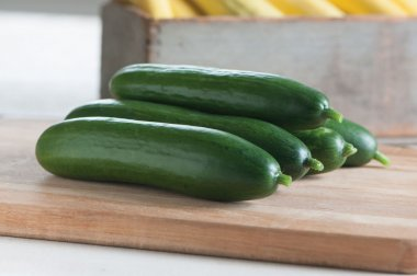 Diva - Treated Cucumber Seed