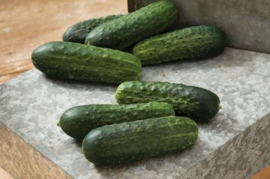 Excelsior - Organic (F1) Cucumber Seed