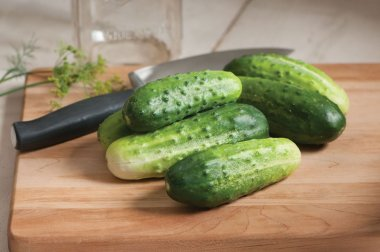 H-19 Little Leaf - Organic Cucumber Seed
