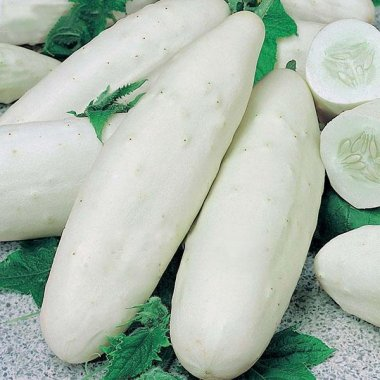 White Cucumber Seeds Garden Balcony Vegetable Fruit Cucumber See