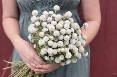 Audray White - Gomphrena Seed
