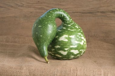 Speckled Swan - Gourd Seed