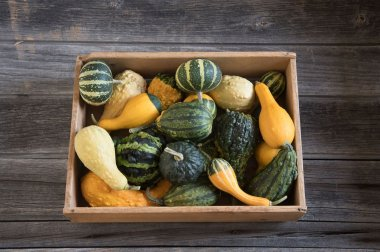 Ornamental Gourds (Small Mixed) Seed