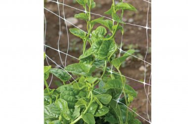 Green Malabar Spinach Specialty Green Seed