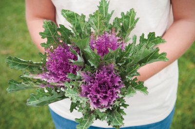 Crane Feather Queen Red - Kale Seed