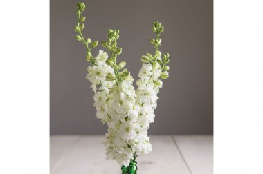 Sublime White - Larkspur Seed