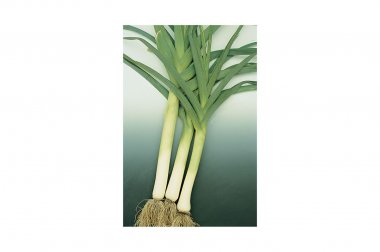 King Richard - Organic Leek Seed