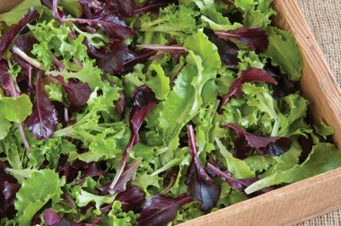 Five Star Greenhouse Lettuce Mix - Lettuce Seeds