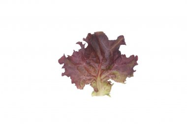 Dark Red Lollo Rossa - Lettuce Seed