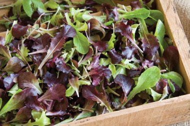 Wildfire Lettuce Mix - Lettuce Seeds