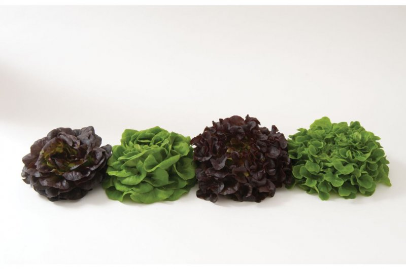 Salanova? Premier Collection - Lettuce Seed