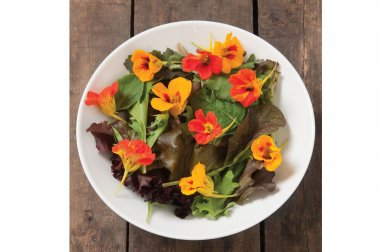 Salad Mix Collection - Organic Vegetable Seed