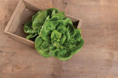 Little Gem - Organic Pelleted Lettuce Seed