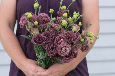 Rosanne Deep Brown Pelleted Lisianthus