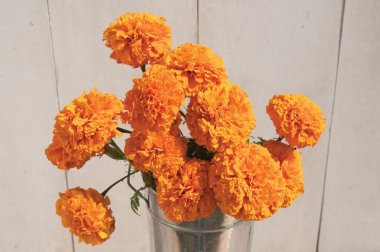 Giant Orange - Marigold Seed