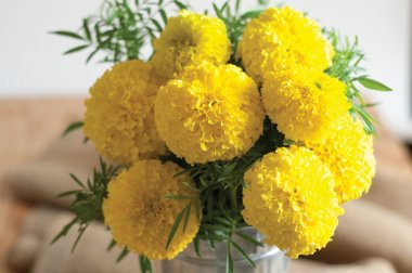 Giant Yellow - Marigold Seed