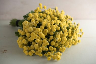 Vegmo Sunny Ball - Pelleted Matricaria Seed