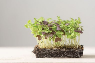Spicy Micro Mix - Organic Microgreen Seed