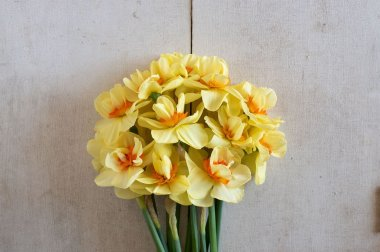 Double Fashion - Narcissus Bulb