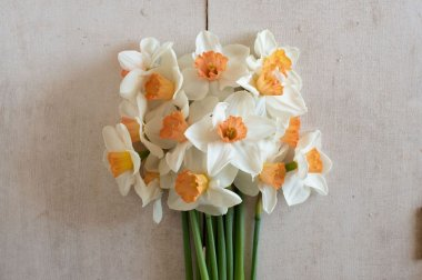 Cool Flame - Narcissus Bulb