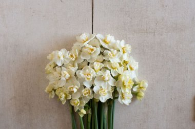 Cheerfulness - Narcissus Bulb