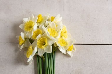 Ice Follies - Narcissus Bulb