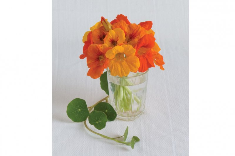 Trailing Nasturtium Mix - Flower Seed
