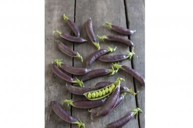 Royal Snap II - Purple Pea Seeds