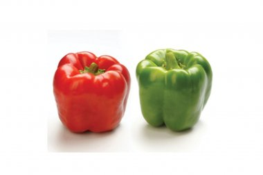 Procraft - (F1) Bell Pepper Seed