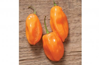 Habanero - Organic Hot Pepper Seed