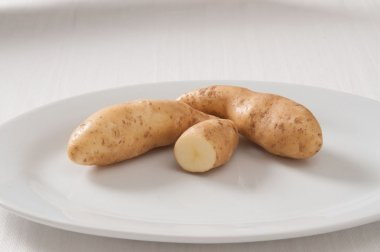 Russian Banana - Seed Potatoes