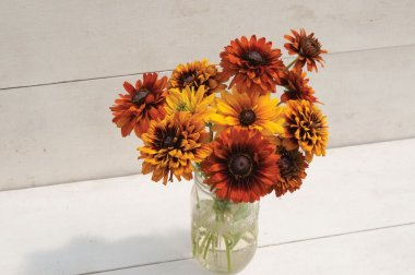 Cherokee Sunset Mix - Rudbeckia Seed