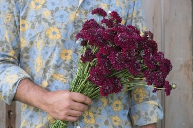 Merlot Red - Organic Scabiosa Seed