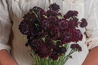 Black Beauty - Organic Scabiosa Seed