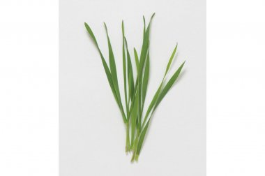 Hard Red Winter Wheat - Organic Shoot Seed