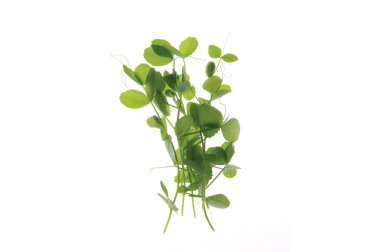 Field Pea - Organic Shoot Seed