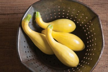 Gold Star - (F1) Yellow Summer Squash Seed