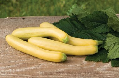 Slick Pik? YS 26 - (F1) Yellow Summer Squash Seed