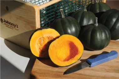 Honey Bear - (F1) Acorn Squash Seed