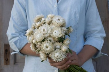 Vintage White - Strawflower Seed