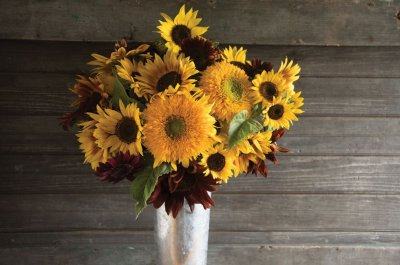 Johnny's Sunflower Collection - Seed