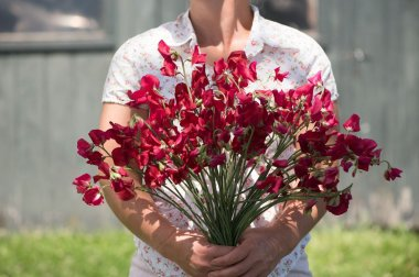 Elegance Deep Red - Sweet Pea Seed
