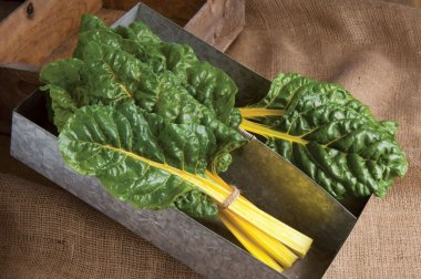 Bright Yellow - Swiss Chard Seed